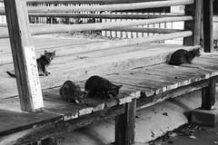 Today's Cat@2016-08-30 (masatsu) Tags: cat thebiggestgroupwithonlycats catspotting pentax mx1 bw