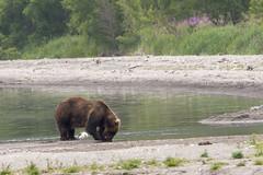 Brown bear and gull (wietsej) Tags: brown bear gull sonyalphadslra900 sal70400g wildlife kamchatka russia kurilskoye lake
