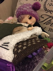 250/366 - I got out Eg's hat box. She's pretty happy.