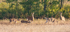 Fall is Here (1 of 1) (amndcook) Tags: farm landscape michigan outdoors deer morning nature wildlife