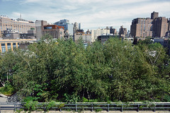 Birches in the Sky (Eddie C3) Tags: newyorkcity nycparks friendsofthehighline parks meatpackingdistrict trees whitneymuseumofamericanart