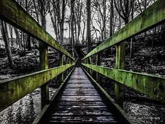 Troll Bridge (Oliver Wood Photography) Tags: wood tree nature fields mystical verdant tytherington prestbury flickraward prestbury2