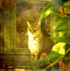 lazy sunny afternoon (kelsk (having a break)) Tags: france texture animal cat kat chat frankrijk tarn dier bruniquel midipyrenees textuur magicunicornverybest mygearandme ringexcellence kelskphotography rememberthatmomentlevel1 rememberthatmomentlevel2