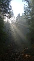 Sunlight (Aah-Yeah) Tags: sun sunlight sunshine fog bayern ray nebel sonne sonnenstrahlen sunbeams achental morgennebel chiemgau lichtblick