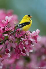A Bird of Paradise (Osprey-Ian) Tags: mygearandme mygearandmepremium mygearandmebronze mygearandmesilver mygearandmegold mygearandmeplatinum mygearandmediamond