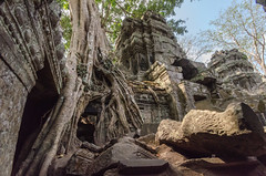 Ta Prohm (Phil Blackburn) Tags: plants religious temple flora ruins cambodia treetrunk siemreap movieset archaeological tombraider filmset thialand biota prasatbakong