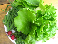 (minucorkish) Tags: food green garden cork vegetable greenhouse crop growing organic