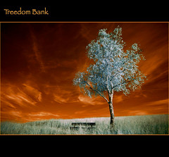 2012 06 05 Treedom Bank (Mister-Mastro) Tags: camera tree bench sonnenuntergang sundown bank infrared arbre baum banque makario 100commentgroup 680nmfilter rememberthatmomentlevel2