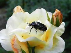 (Somke030) Tags: flower bug nikon 500 bor plac