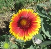 046 (Aldo433) Tags: flowers italy italia natura fiori piante prato giardino abruzzo ortona