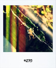 """#DailyPolaroid of 29-6-12 #275 • <a style=""""font-size:0.8em;"""" href=""""http://www.flickr.com/photos/47939785@N05/7485589644/"""" target=""""_blank"""">View on Flickr</a>"""