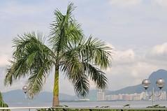 Tai Po Waterfront Park (mawingchung,,) Tags: china park sky macro tree hongkong nikon hong kong  kowloon   d300s