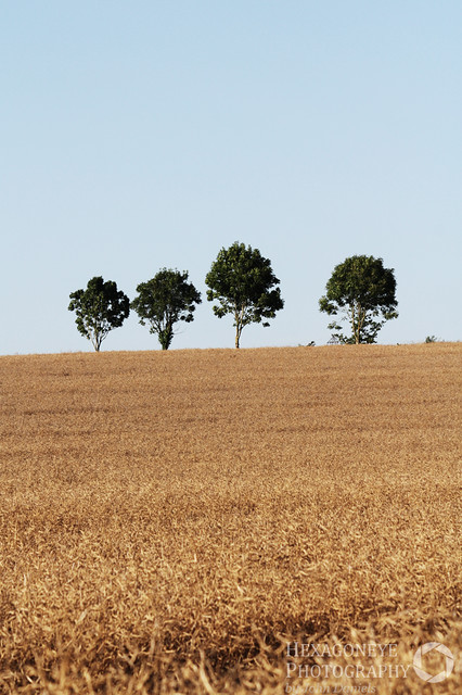 4 Trees in a Field