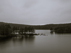 Gray forest lake (spookst) Tags: lake rain forest long exposure gray graduatedfilter