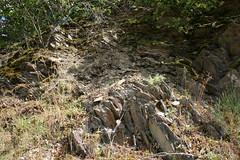 ckuchem-1455 (christine_kuchem) Tags: ahrtal anbau anbaugebiet eifel felsen rotweinwanderweg schiefer schieferfelsen sommer weinanbau weinberg weintraubenanbau weintrauben