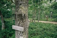 (Doug J.) Tags: film 35mm nikon f3 f3hp kodak portra 400 forest woods nature hike marthas vineyard f28 ai trees plants leaves bokeh dof tree trunk signs posts wood