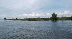 5 River Delta Alabama (151) (Stonehenge 68) Tags: 5riversdelta mobile delta wildlife alligator duck pelican water waterhyacinth hemlock snowyegret alabama