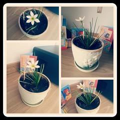 PicsArt_07-28-12.37.57 (katharine_syrbu) Tags: little flower sweet home cute nature beautiful blooming