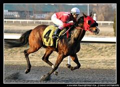 IMG_9618 (femalejockeys) Tags: femalejockeys turfway park female athletes horse racing horses thoroughbred kentucky derby