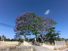 (andrisa1) Tags: sacoma alcudia sller tramuntana petra rovinj chiemsee