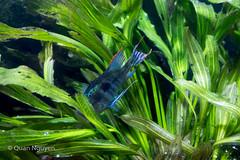 FujiXE2-0152 (QTTheory) Tags: cvg cincinnati ohio newport aquarium newportaquarium fujifilm fujinon xe2 xf 1855mmf284rlmois