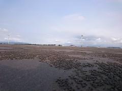 (William Chen1) Tags:       beach crab  sea sand sculpture  taiwan
