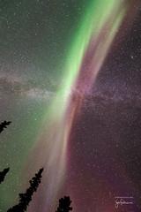Once again I stand under the glorious light of the aurora borealis (josefrancisco.salgado) Tags: 1424mmf28g canada d4 nikkor nikon northernlights northwestterritories yellowknife astrofotografa astronomy astronoma astrophotography aurora auroraborealis aurorae auroras cielonocturno estrellas exposicinlarga longexposure night nightsky stars ca