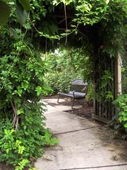 Botanical Garden (_minette) Tags: wisteria arbor bench uwbotanicalgarden uwmadison madisonwi