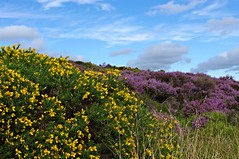 Stanton Moor (Blue sky and countryside.) Tags: heather gorse stanton moor august heritage site peak district national park derbyshire birchover england pentax purple yellow