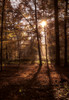 Changing seasons (Frank ) Tags: tokina2880mm canon6d limburg beukenbos herfst fall autumn seasons europe backlight sun rgb iso flare coated zoomlens trees nature topf25 top50 topf100 topf200