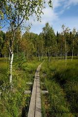 pitkospuut (Paivi Hannele) Tags: finland ourfinland landscape luonto kasvi maisema vesi puut thisisfinland joki jrvi syksy autumn