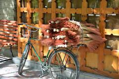 Brooms and Bicycle (Peter Schnurman) Tags: broomsonabicycle uzbekistan