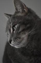 Turing (guillermomerinojimnez) Tags: turing cat