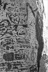 (frscspd) Tags: 75540014 20160714 pentax pentaxmx mx takumar takumar58mm 58mm ilford ilfordxp2 ilfordxp2400bw film filmgrain tree treetrunk realjardnbotanico madrid realjardnbotanicodemadrid