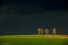 Storm is coming (Nikolay St. Dimitrov) Tags: storm tree dark landscape spring scenery darkness naturepoetry
