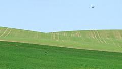 Avine counterpoint (claustral) Tags: green birds skne spring nikon sweden rows fields d200 tilled rollinghills