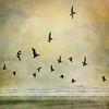 reach for the sky (1crzqbn) Tags: sunset sunlight seascape color texture pelicans birds square surf waves 15 ie shining hypothetical deepavali hss reachforthesky vividimagination artdigital idream contemporaryartsociety shockofthenew innamoramento trolled memoriesbook awardtree artistictreasurechest daarklands memoriesbook5 imagicland magicunicornverybest sailsevenseas crazygeniuses exoticimage 1crzqbn sliderssunday netartii 19522012 ftsmay nyebeachor ♥happybirthdayrebeca♥