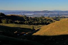 halfway up (pukunui81) Tags: light newzealand mountains fog canon landscape morninglight pond shadows sheep earlymorning hills waikato ravine gully bombayhills 550d t2i canoneos550d mtpuketutu