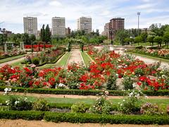 Rosaleda de Valladolid. (lumog37) Tags: flowers roses flores gardens rosas jardines rosales