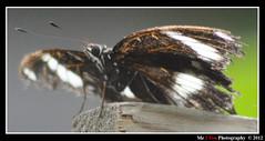 Butterfly World S 008 (Me 2 You Photography 550,000+ Views) Tags: allofnatureswildlifelevel1 rememberthatmomentlevel1 me2youphotography unlimitedinsectslevel1 unlimitedinsectslevel2 unlimitedinsectslevel3 unlimitedinsectslevel4 unlimitedinsectslevel5 unlimitedinsectslevel6 unlimitedinsectslevel7