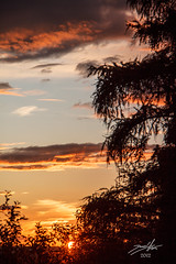 Sunshine After The Rain (DaLMaTiNo) Tags: sunset sky cloud sun color colour nature clouds landscape schweiz switzerland spring colorful europe suisse sundown dusk swiss natur himmel rorschach che colourful svizzera stgallen landschaft kiefer priroda ch 2012 zalazaksunca bor oblak nebo sanktgallen stgall zalazak svizra oblaci crveno suton dalmatino canon50d