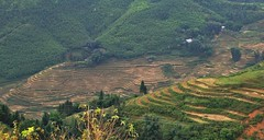 Sapa (Grissss) Tags: terraces vietnam r ricefields sapa hmong mong indochina catcatvillage hmongvillage hmongminority ricefieldsterraces mongvillage catcatsapa