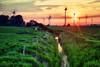 Sonnenenergie (dubdream) Tags: trees sunset sky sun water grass clouds creek germany landscape nikon cows wind meadow windmills hedge hdr fehmarn windturbine schleswigholstein d800 windpark windmühlen presen dubdream