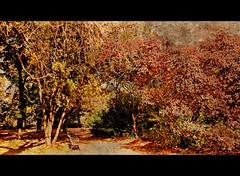 Coloro che sognano di giorno (Ska * mon) Tags: trees parco alberi bench praga panchina