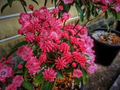 (+ n9ne +) Tags: flower japan casio hdr photomatixpro exzr100