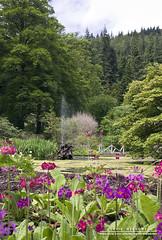 Fountain (DMeadows) Tags: wood flowers trees fountain forest woodland garden pond flora argyll spray botanics benmore benmorebotanicgardens davidmeadows dmeadows davidameadows dameadows yahoo:yourpictures=yourbestphotoof2012