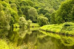 Lahntal (Quasebart ...thank you for 4 Million Views) Tags: tree green nature forest river germany deutschland hessen natur fluss wald lahn reflectilon