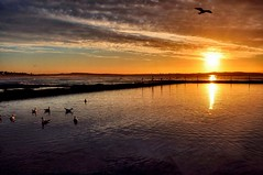 Sunrise Reflections @ Cronulla (missgeok) Tags: sunrisereflectionscronulla sunrise goldencolours reflections rockpool oceanbath cronullabeach sydney seagulls silhouettes lighting composition mood morning sun sky clouds popular seagullsilhouettes birds fence pool sunrays sunbeams cronulla australia warmth glow scenery cloudy day