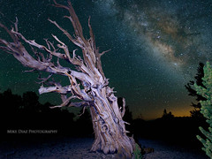 Timeless (mwdiaz) Tags: california ca old lightpainting cold canon dark stars freezing whitemountains roadtrip astrophotography milkyway easternsierra inyo ancientbristleconepineforest mikediazphotography