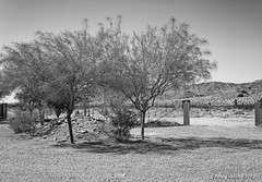 Palo Verdes in Black and White (Randy Heinitz) Tags: trees summer blackandwhite desert palmsprings sanandreasfault coachellavalley gravel skyvalley paloverdes canon60d
